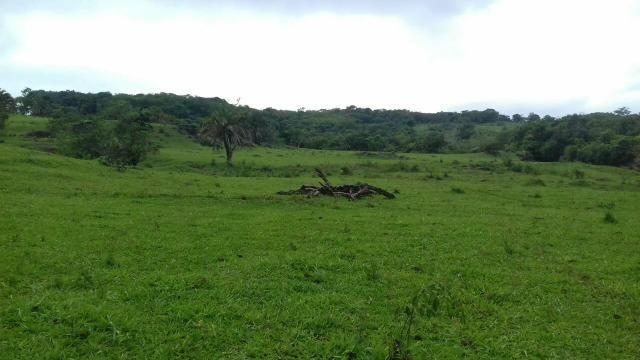 Uma excelente Fazenda 530 alqueire em Pium Tocantins