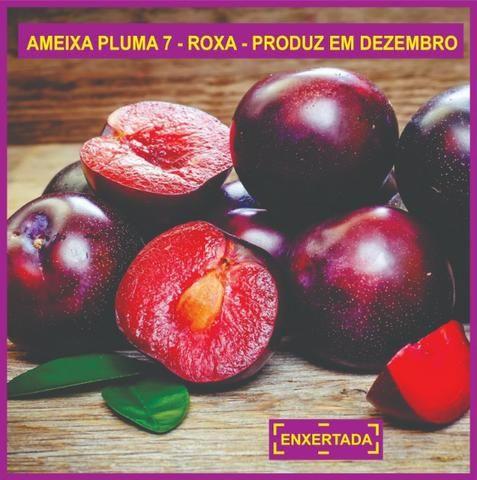 03 Mudas De Ameixas - Enxertadas - Super Promoção - Foto 4