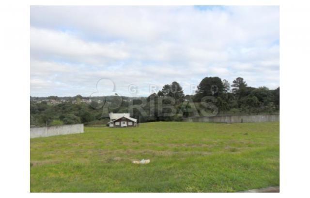 Terreno residencial à venda, vila torres i, campo largo - te0117. - Foto 13