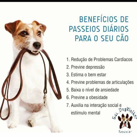 Passeador de cães ( Dog Walker) - Foto 4