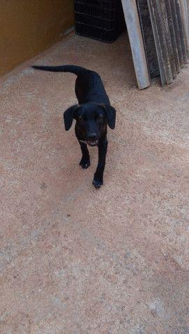 Doa_se cachorra porte pequeno 4 mês só falta a última varcina *