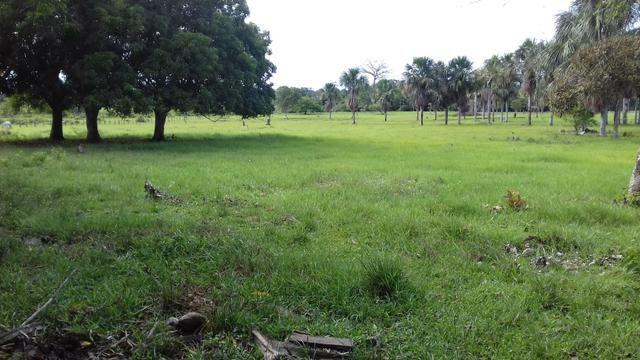 Vendo Fazenda em São João da baliza - Foto 6