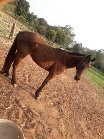Cavalo+ sela de team roping