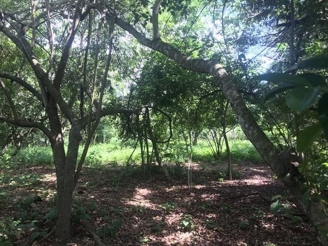 Granja, sítio, área, fazenda em Igarassu, Porto do vasco na estrada de mangue seco! - Foto 10