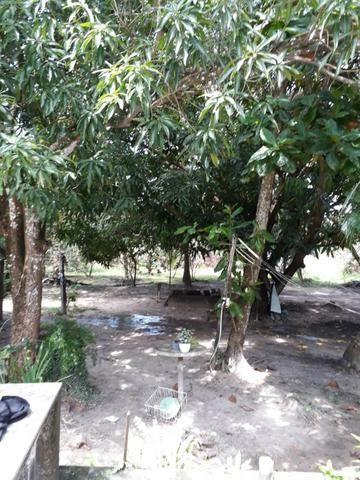 Sitio na Piçarreira - Vendo - Foto 4