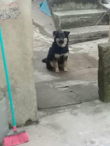 Cachorro p alemao