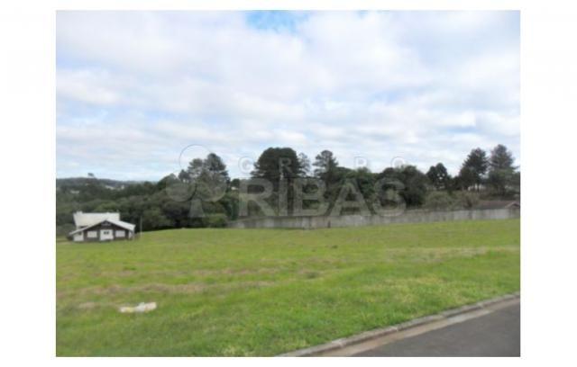 Terreno residencial à venda, vila torres i, campo largo - te0117. - Foto 12