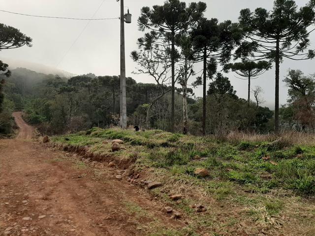 Fazenda de 94 alqueires .Alagado Rio da Areia - Faxinal do Céu . Pinhão PR - Foto 16