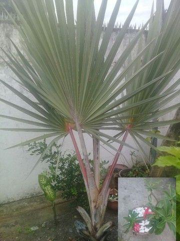 Dp.jardinagem  - Foto 3