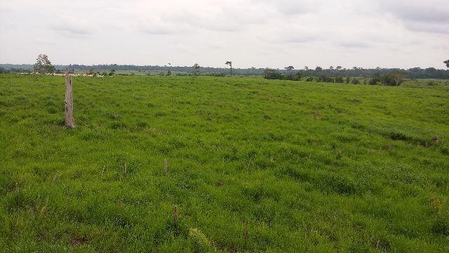 Fazenda a 60 km de ariquemes