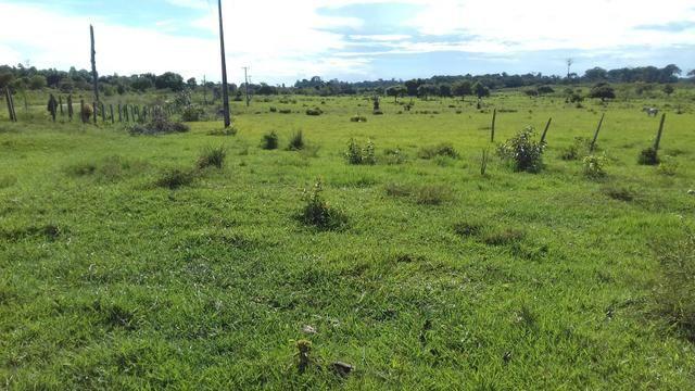 Vendo Fazenda em São João da baliza - Foto 7