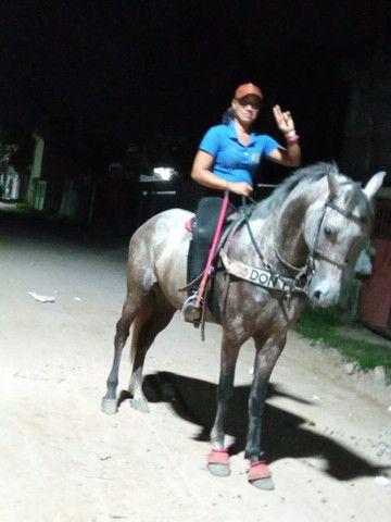 Vende esse cavalo lindo muito bom de passada ele é manso