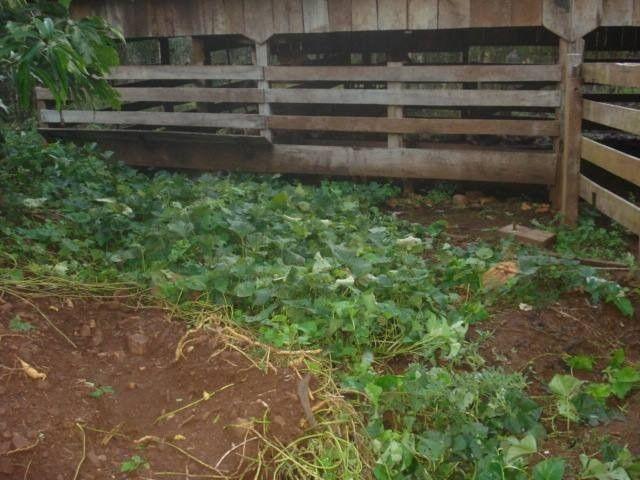 Chácara 25 hectares em Porto Lucena RS. - Foto 4
