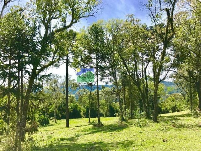 Terreno 2 hectares em Urubici - Foto 6