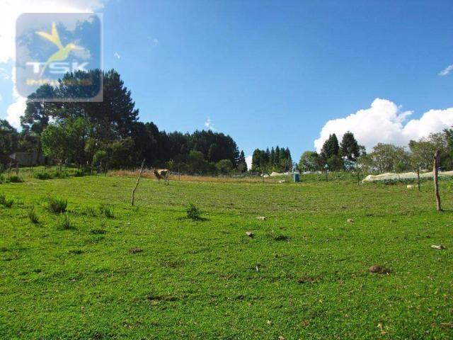 Ch0137 - chácara mandirituba 1 alq. 32 km de curitiba - Foto 14