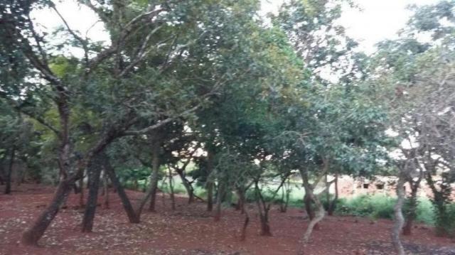 Chácara rural à venda, sítios de recreio mansões do campus, goiânia. - Foto 5