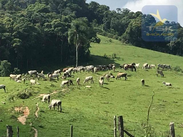 Fa0009 fazenda à venda, 605000 m² por r$ 3.150.000 - zona rural - quitandinha/pr - Foto 10