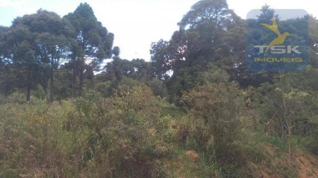 CH0329 - Quitandinha 5 Alq. Chácara 2 Km do asfalto 3,5 km da Cidade - Foto 12