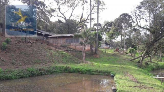 Ch0311 - mandirituba - chácara 10.000 m² com casa antes do pedágio - Foto 20