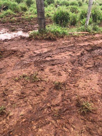 Terra roxa: arrendo para lavoura - Foto 16