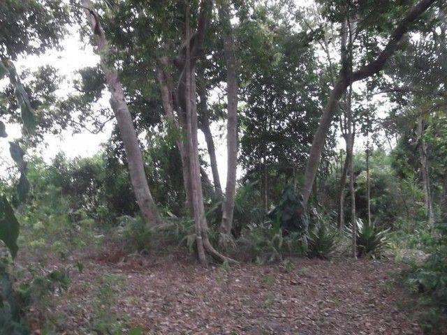 Terreno para Venda em Mata de São João, Acú da Torre - Foto 8