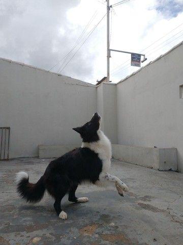Border collie macho - Foto 4