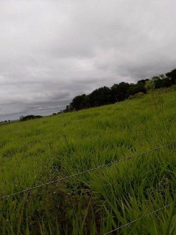 Chácara 25 hectares em Porto Lucena RS. - Foto 5