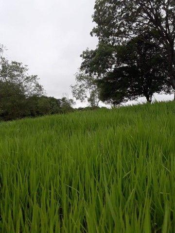 Chácara 25 hectares em Porto Lucena RS. - Foto 8
