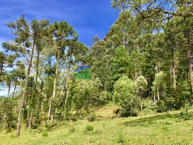 Terreno 2 hectares em Urubici - Foto 4