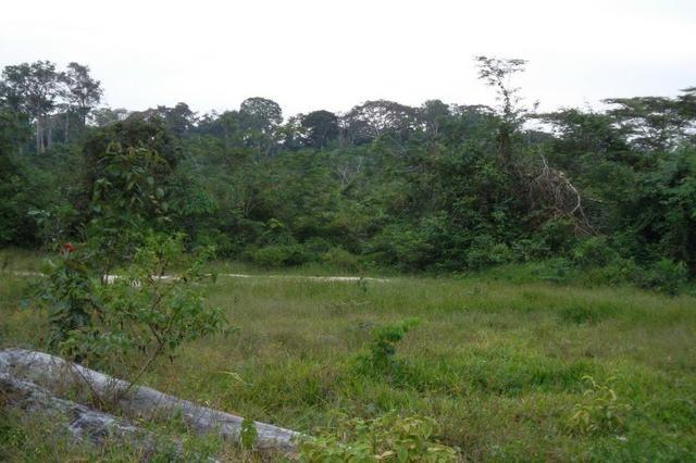 Fazenda de 1.330 hectares Vila Equador em Rorainópolis/RR, ler descrição do anuncio - Foto 4