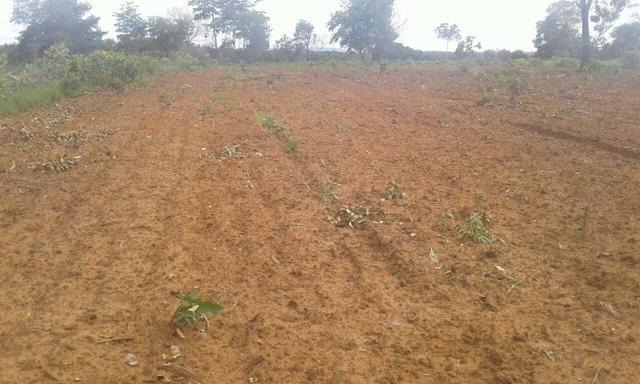 Arrendo para plantar soja 1.000 hectares