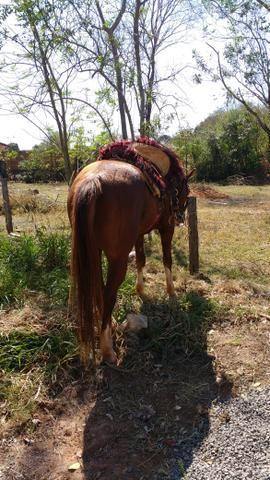 Vendo Cavalo. Ou troco por mula.