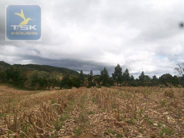 Fazenda em quitandinha - (cerrinho) - - Foto 3