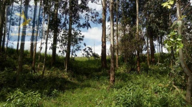 CH0314 Mandirituba 4.200 m² de área p/ Chácara com tanque luz 300 m asfalto - Foto 7