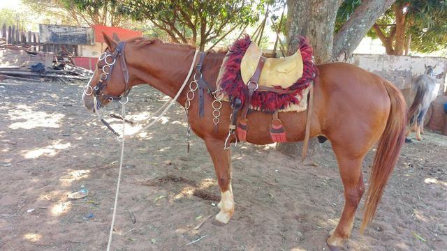 Vendo Cavalo. Ou troco por mula. - Foto 6