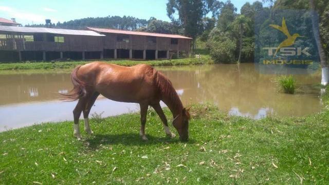 Fa0009 fazenda à venda, 605000 m² por r$ 3.150.000 - zona rural - quitandinha/pr - Foto 19
