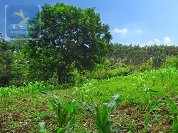 Chácara rural à venda, 4 pinheiros, mandirituba. - Foto 20