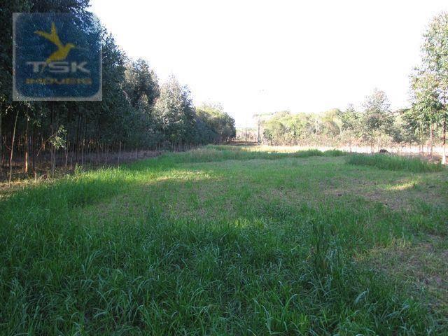 Ch0153 - contenda chácara 59.000 m² plana, rica em águas, parte com eucaliptos - Foto 7