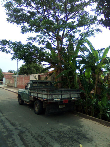 Transportes Pedro Anápolis. - Foto 2