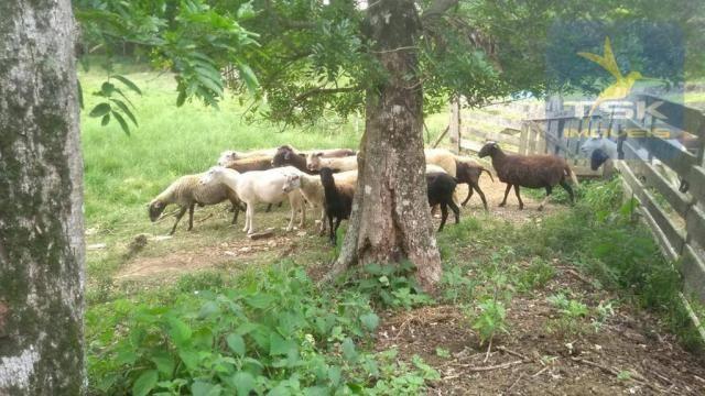 CH0329 - Quitandinha 5 Alq. Chácara 2 Km do asfalto 3,5 km da Cidade - Foto 6