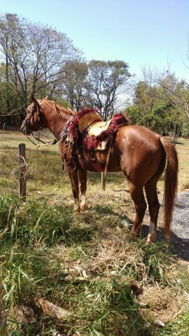 Vendo Cavalo. Ou troco por mula. - Foto 3