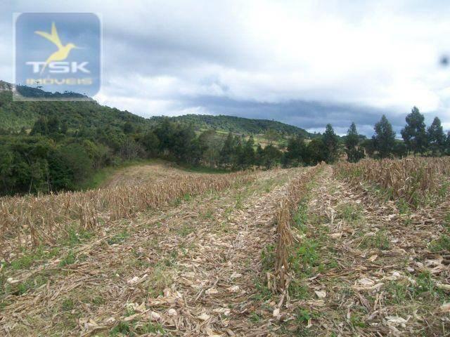 Fazenda em quitandinha - (cerrinho) - - Foto 12