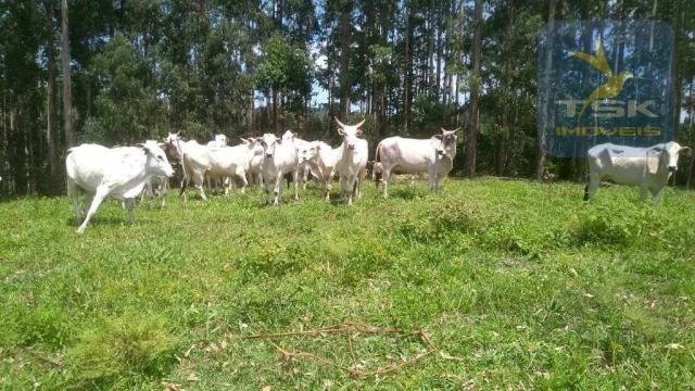 Fa0009 fazenda à venda, 605000 m² por r$ 3.150.000 - zona rural - quitandinha/pr - Foto 11