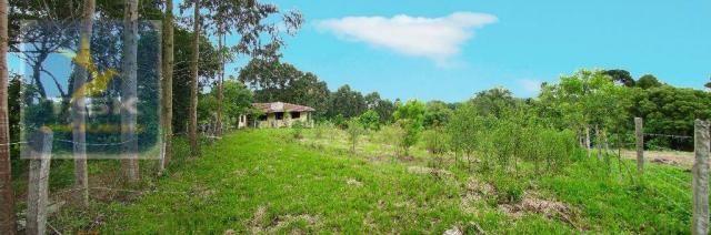 Chácara rural à venda, 4 pinheiros, mandirituba.