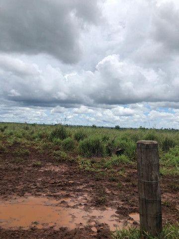 Terra roxa: arrendo para lavoura - Foto 6