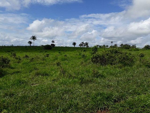 Terra roxa: arrendo para lavoura - Foto 13