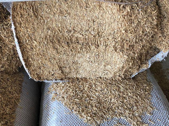 Palha de arroz  - Foto 5