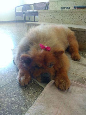Pet sitter - Foto 2