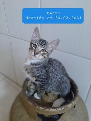 Gatinhos para adoção ? - Foto 2