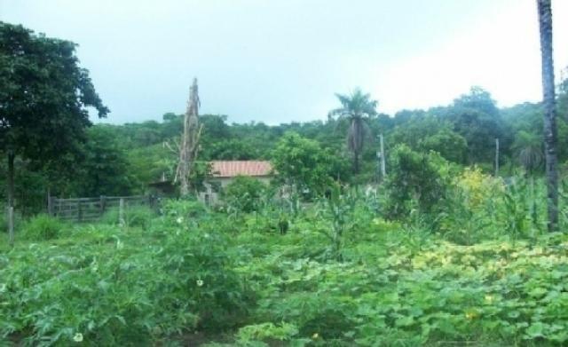 Venda de uma Fazenda- 25 alqueires (1.210,000 M²) - Arenópolis-GO - Foto 7